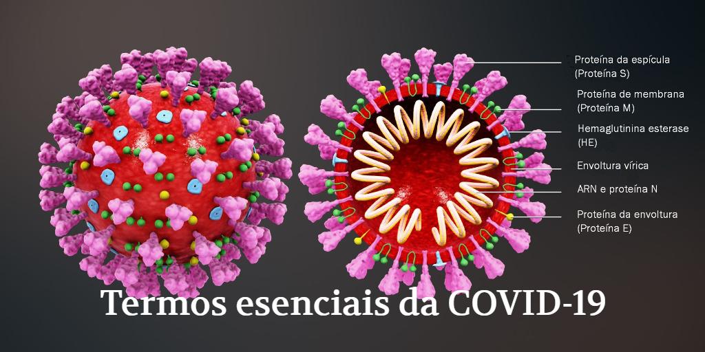 https://www.usc.gal/export9/sites/webinstitucional/gl/servizos/snl/terminoloxia/imaxes/TE_COVID-19.png
